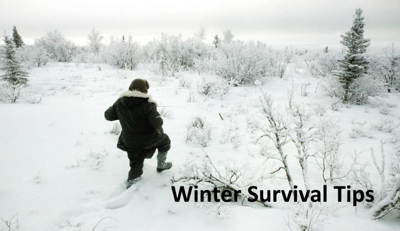 survive in winter